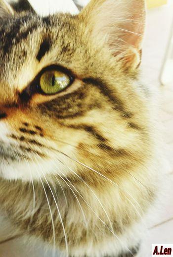 Cat Color Portrait Eye Vibrisse