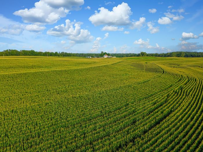 Agriculture Beauty In Nature Cloud - Sky Crop  Day Environment Farm Field Green Color Growth Land Landscape Nature No People Outdoors Plant Plantation Rural Scene Scenics - Nature Sky Tranquil Scene Tranquility