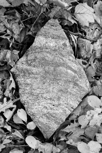 Geometry in nature, parallelogram. Large stone in the woods, surrounded by dry leaves. Nature And Geometry Nature Parallelograms Rocks Dry Leaves Black And White