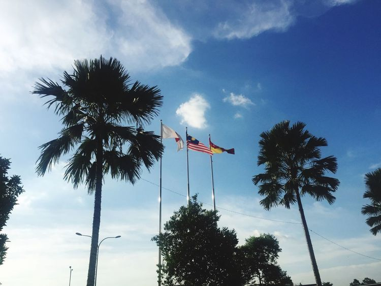 Flags against sky Flag Palm Tree Tree Sky Low Angle View Cloud - Sky Patriotism Pride Day No People Outdoors Nature Jointventure Malaysian Flag Japan Selangor