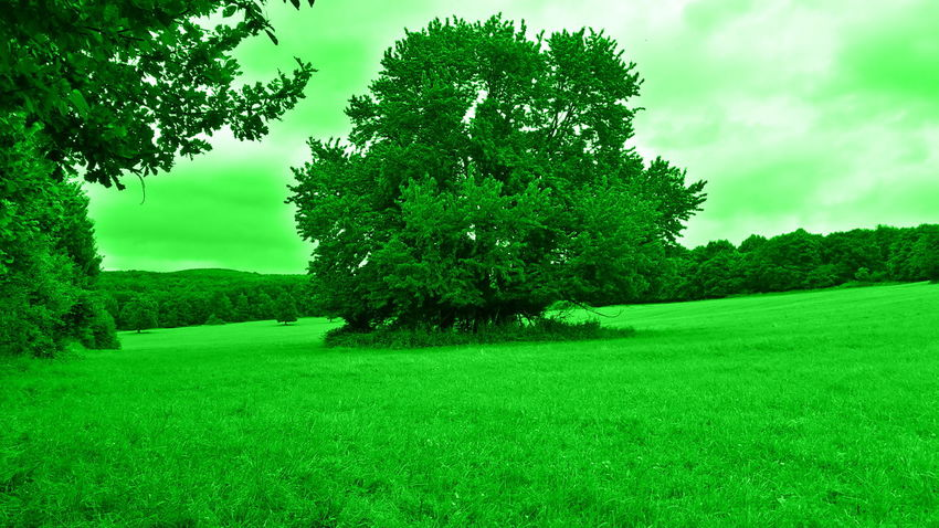 Beauty In Nature Field Grass Grassy Green Color Lush Foliage Male Karpaty Nature Sky Tree