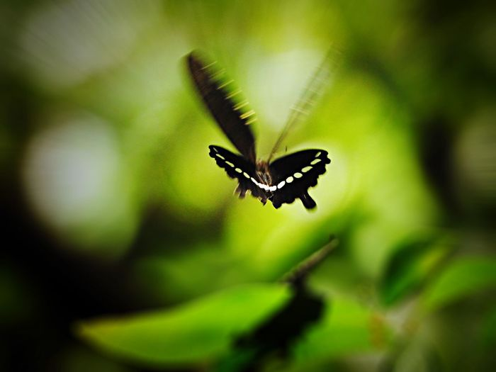 Butterfly flying over plants