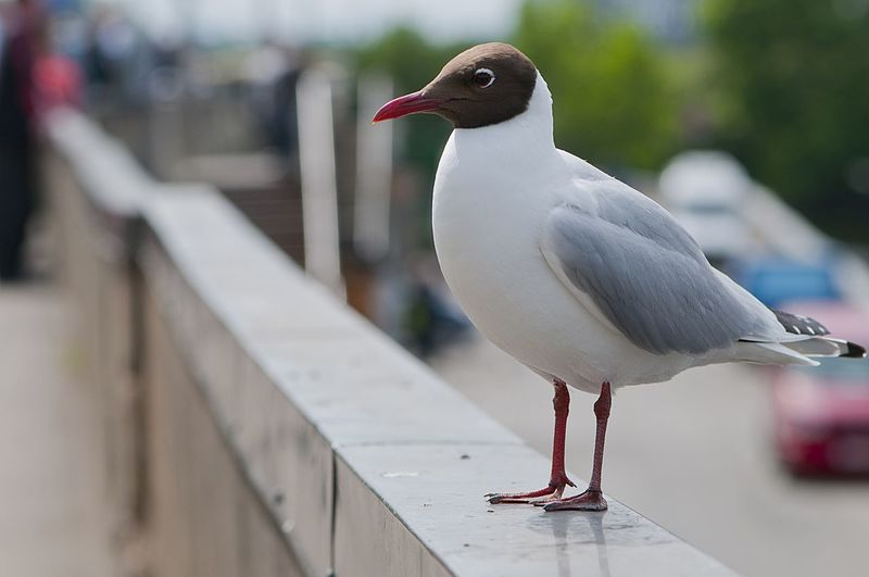 Adapted To The City Animal Themes Animal Wildlife Bird Birds Row City Life Close-up Day EyeEmNewHere No People Outdoors Perching Seagulls Street Perspective The City Light