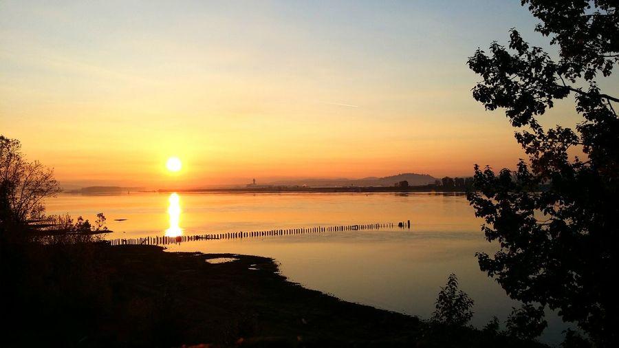 Sunrise over PDX Tree Water Sea Sunset Beach Silhouette Reflection Sun Sky Horizon Over Water