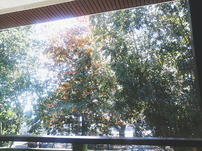 Nature Philippines Open Edit Window Trees