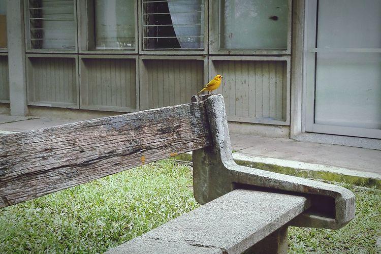 Bird Bird Photography Natural Urban