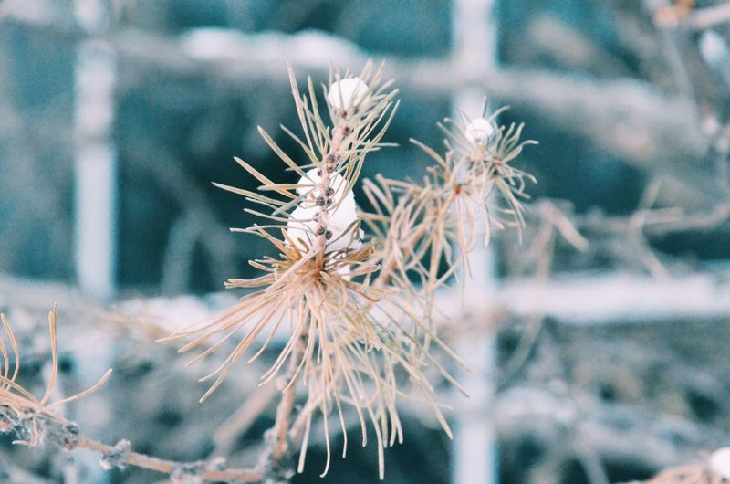 VSCO Cam VSCO Vscocam Nature Trees Nature_collection Wood Naturelovers Christmas Tree