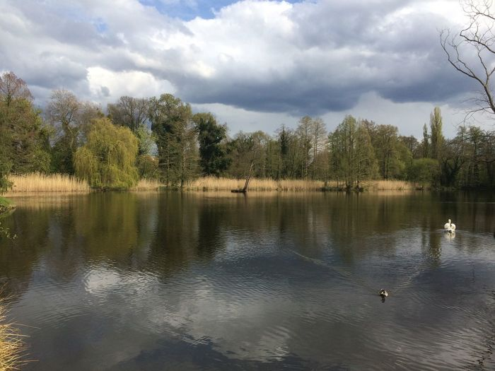 #Potsdam Animal Themes Animal Wildlife Animals In The Wild Beauty In Nature Bird Cloud - Sky Day Duck Flying Lake Nature No People Outdoors Reflection Scenics Sky Swan Swimming Tranquil Scene Tranquility Tree Water Water Bird Waterfront