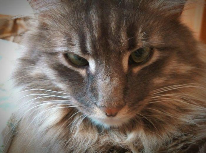 My cat Is Going To Sleep Catsofinstagram Catstagram Cats 🐱 Cat Lovers Cats Of EyeEm Catoftheday Cats Cat♡