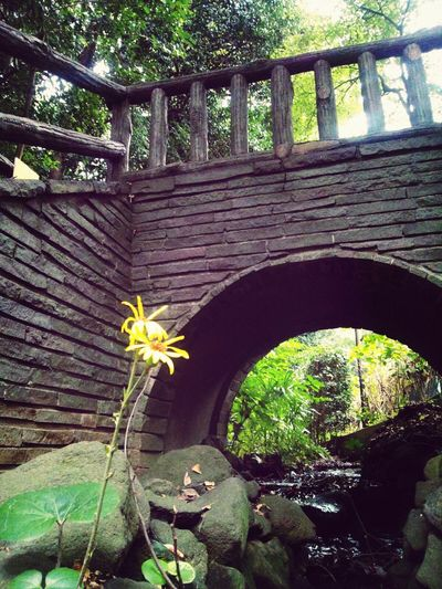 散策 Yellow Flower Bridge 小川 秋