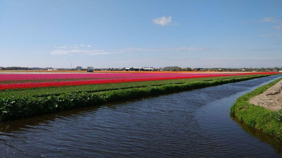 Summer joy! Flower Water Multi Colored Flower Head Flowerbed Rural Scene Summer Agriculture Field Crop