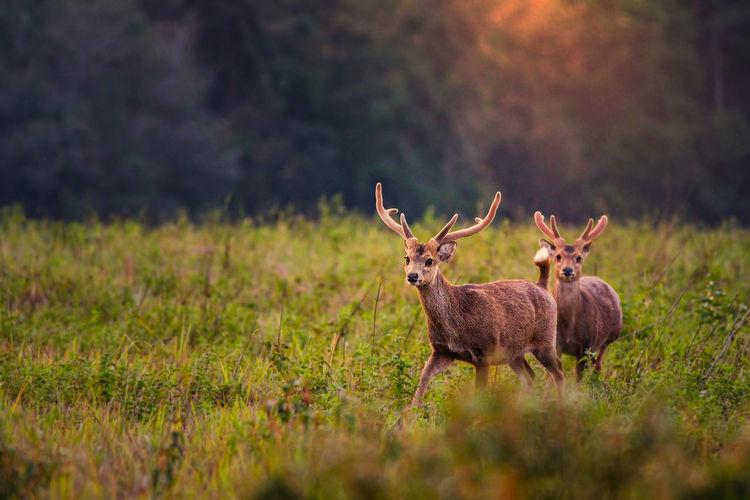 Deer by plants