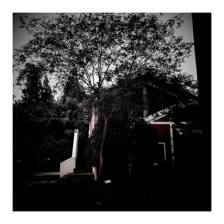 南园滨江绿地 Vignette 上海.中国 Vignette Art 秋色 Red Color CityLifeStyle Shanghai, China 秋天 City City Street House Outdoors Autumn Autumn Leaves Autumn Colors