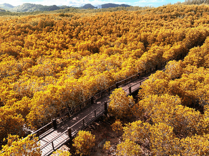 High angle view of yellow autumn trees on land