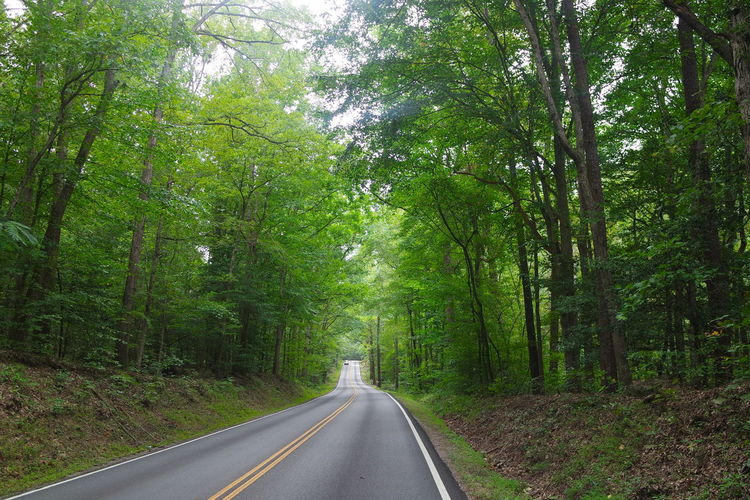 Trees Road Tree Outdoors Day Nature Path Way Treelined Tree Lined Color Green Green Color