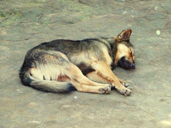 Cool down! Take it easy! Hund