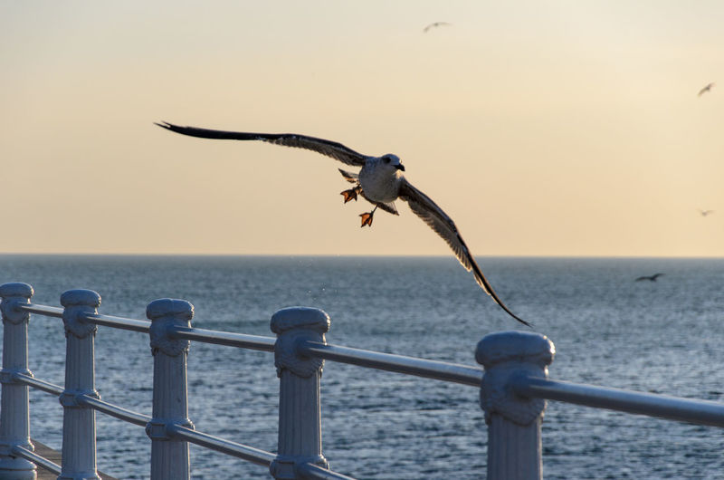 Animals In The Wild Fly Flying Focus On Foreground Seagull Seaside Walk Water