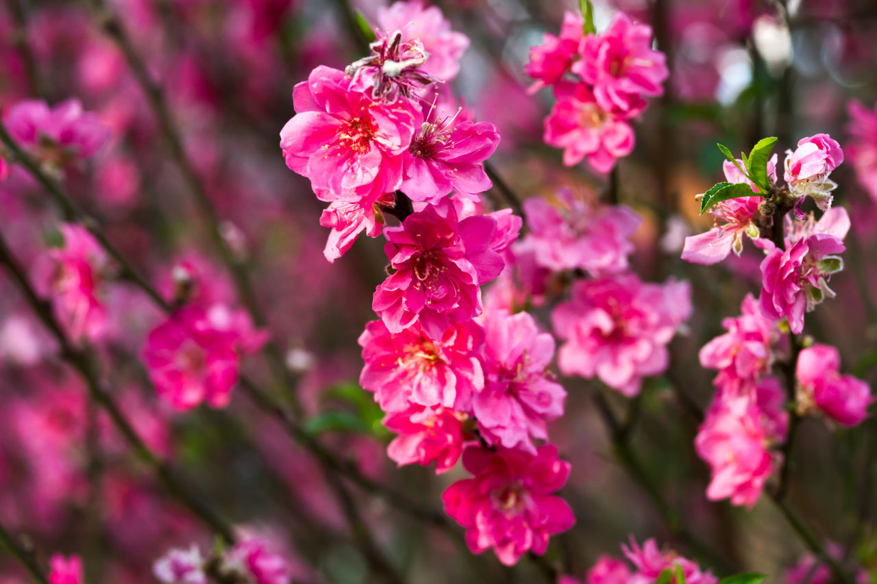 Close-Up Of Pink Blossom