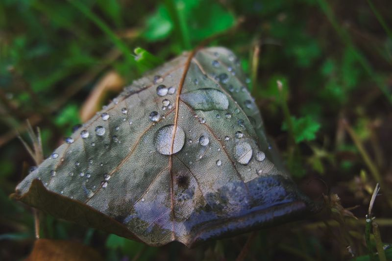 RainDrop Plant Close-up Nature No People Leaf Plant Part Drop Day Focus On Foreground Beauty In Nature Growth Green Color Land Water Outdoors