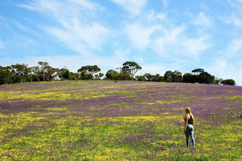 Flower Flowerfield Field Nature Naturelovers Rural Scene Agriculture Outdoors Adult Real People Sky Day Adults Only Clouds Nature Photography Nature Travel Spring Second Valley Adelaide South Australia Australia Canon Canon50D Canonphotography