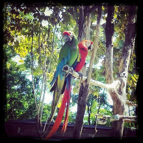 EyeEm Birds Parrots Perfect Couple ♥