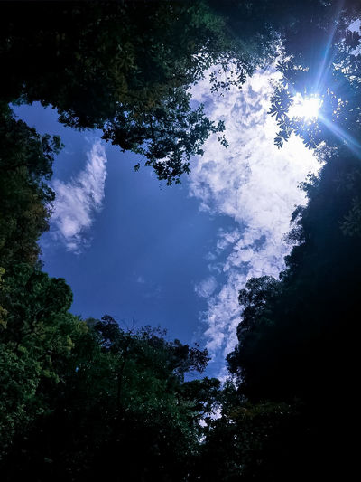 Heart Shape Heart ❤ Heart Shadow Heart Cloud Heartshape In Nature Nature Nature Photography Sky Sky And Clouds Sky_collection Sunrise Sunlight Sunny Amazing Nature Amazing View Nice Day Nature_perfection Tree Forest Star - Space Blue Sky Close-up Treetop Tree Area Long Shadow - Shadow