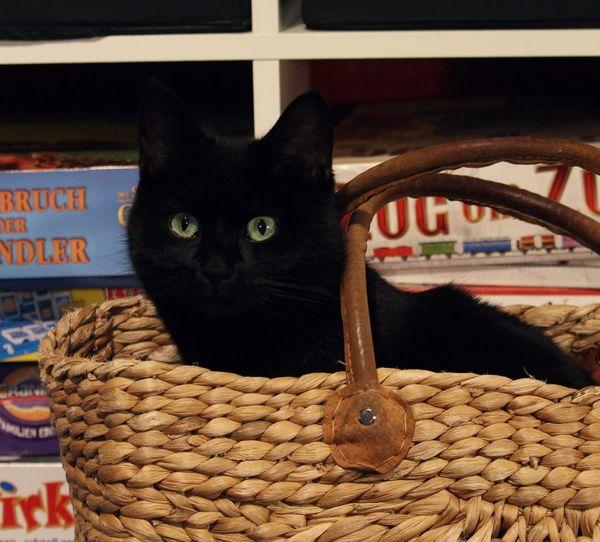 Green Eyes Shoppingbag Basket Black Cat Games Domestic Cat Pets Feline