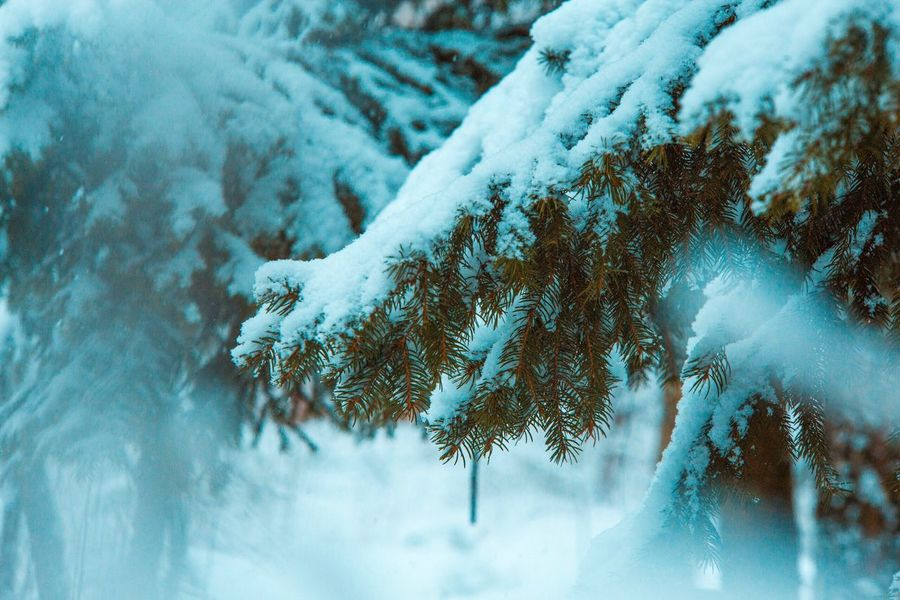 Winter Cold Temperature Snow Weather Nature Frozen Beauty In Nature Frost Ice Tranquility Tree Day Outdoors Scenics No People Close-up Tranquil Scene Cold Frozen Lake