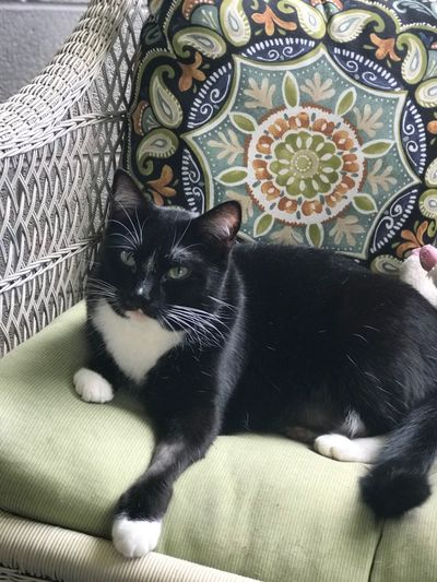 Portrait of cat on sofa
