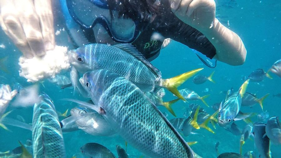 Close-Up Of Scuba Diver Feeding Fishes In Sea