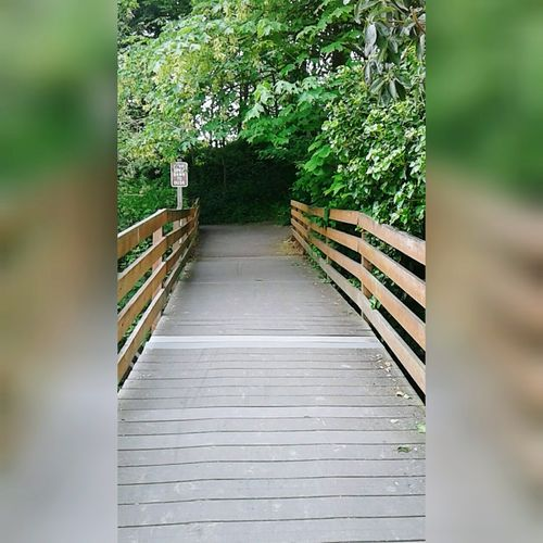 """People come and go, that's life"" ~ WA Goodvibes Naturelover Bestshots Lake PNW Poulsbo Summer Tree Footbridge Wood - Material Railing Pathway Narrow Woods Long Lane Wood Paneling Walkway Scenics"