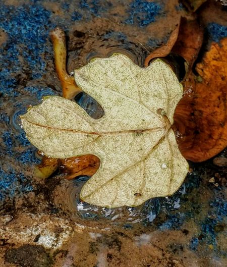 rich colors Leaf Sand Multi Colored Close-up Textured  Backgrounds Natural Pattern Leaf Vein Fallen Detail