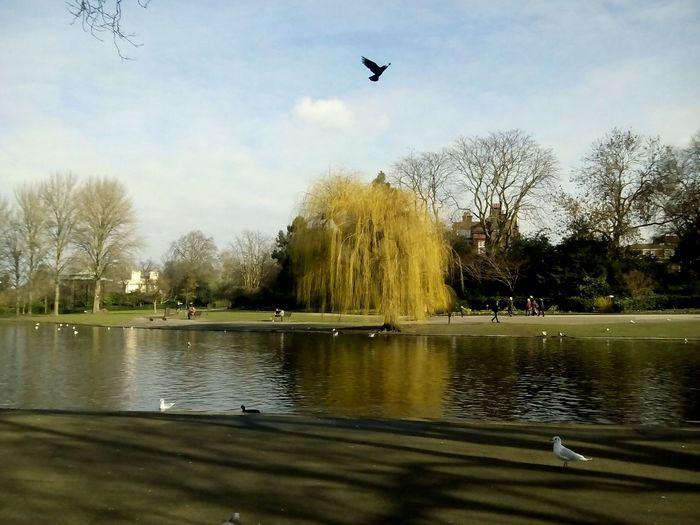 London 2017 London Regents Park Water Flying Spread Wings Reflection Flock Of Birds Animal Themes