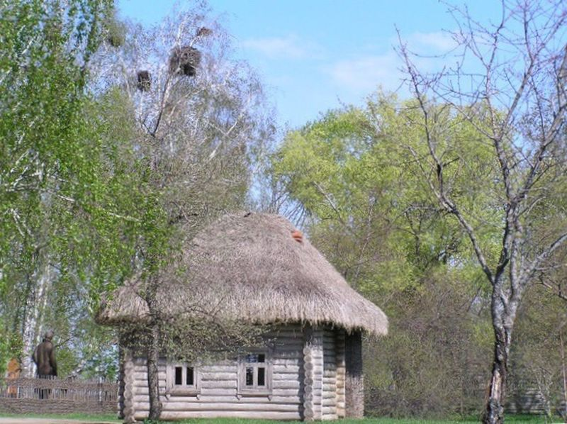 Thatched Roof Tree Built Structure Hut Architecture Building Exterior Day