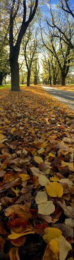 Autumn leaves fallen on tree