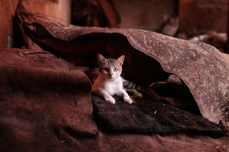 Marocco Marrakech Pets Domestic Domestic Animals One Animal Cat No People Portrait Sitting Relaxation