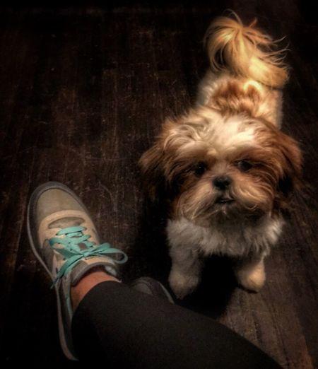 Mellow Monday with Milo.... Dogdays Dogs Of EyeEm