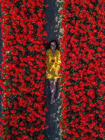 Portrait of smiling woman lying on tulip farm