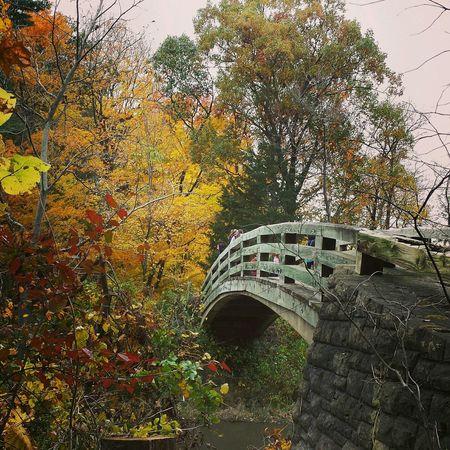 StarvedRock Bridges Fall