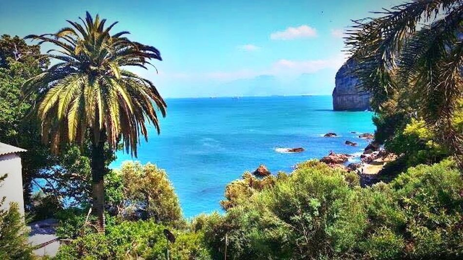 Algeria Photography Sea Palm Tree Sky Horizon Over Water Nature Beach Beauty In Nature Vacation Destination Great Outdoors Live For The Story