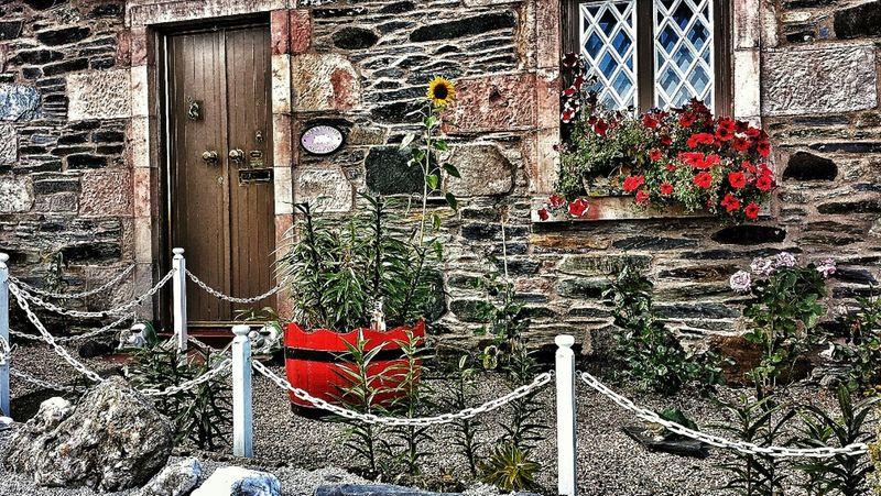 Sunflower Cottage Garden