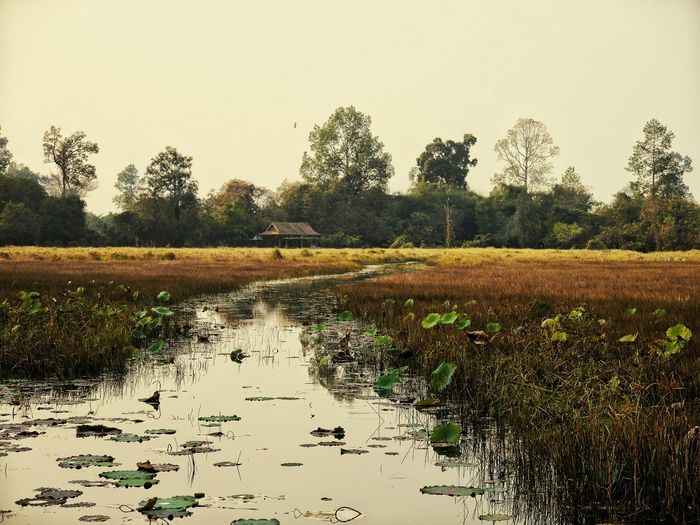 Agriculture Farm Nature Crop  Rural Scene Growth Tree Sky Rice Paddy Outdoors Wetland Bird Landscape No People Scenics Water Large Group Of Animals Day Animal Themes EyeEmNewHere Kambodscha Kambodia