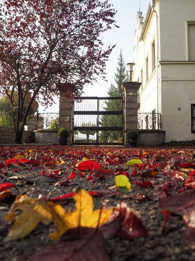 Autumn gate Autumngate Castlegate Autumn Leaf Change Architecture Built Structure Nature No People Outdoors Building Exterior Flower Day Beauty In Nature Tree Fragility Maple