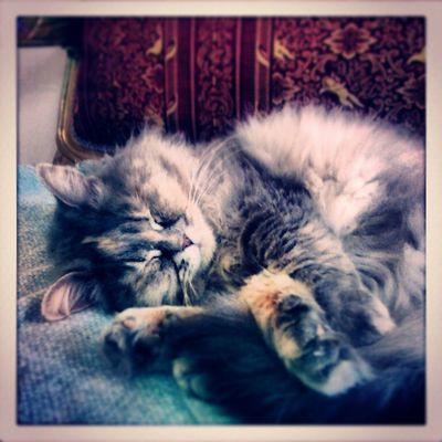 Sleepybaby