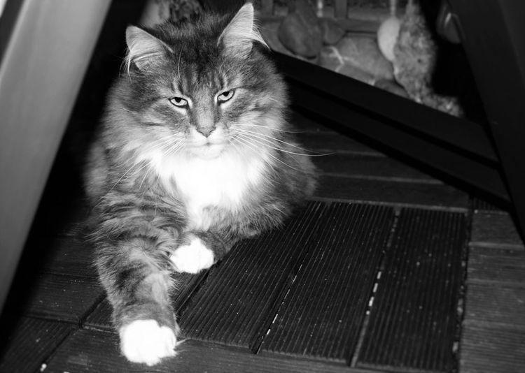 Adorable Cat O