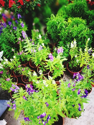 Green Color Nature Growth Flower Beauty In Nature Plant