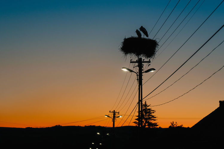 Low angle view of silhouette of stork bird in nest on electricity pylon against sky during sunset