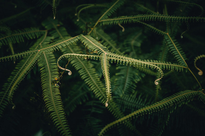 Beauty In Nature Close-up Costarica Fern Focus Fractal Plant Nature's Diversities