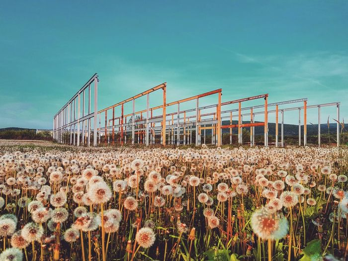 Godiscoversummer Siamdiscovery Croatia Nature Nature Photography Dandylion Construction Buildingstructure Sun Sky Flower Sky Agricultural Field Sunrise Shining Calm Sunbeam