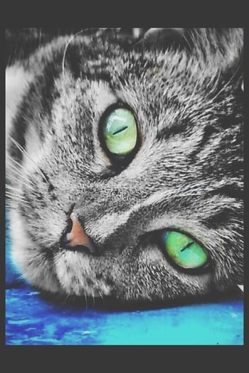 My Cat Lol